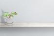 Gorgeous houseplant Maranta in cement vase pot isolated on white background