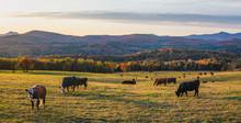 Autumn Sunset On Country Farm Road Near Montpelier Vermont