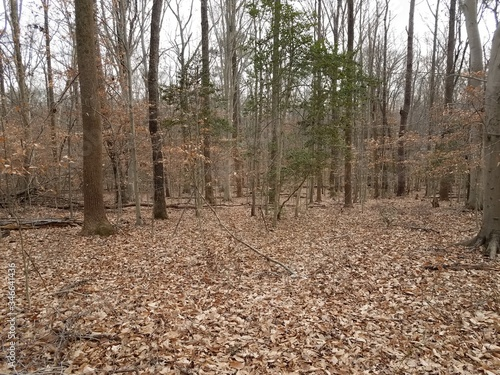 brown fallen leaves and trees in woods