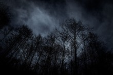 Low Angle View Of Bare Trees Against Cloudy Sky At Night