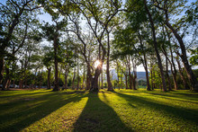 Sunbeams Shining Through Natural Trees And Green Grass In The Ground, Sun Rays In A Green Forest.