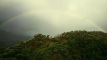 Low Angle View Of Trees Against Rainbow In Sky