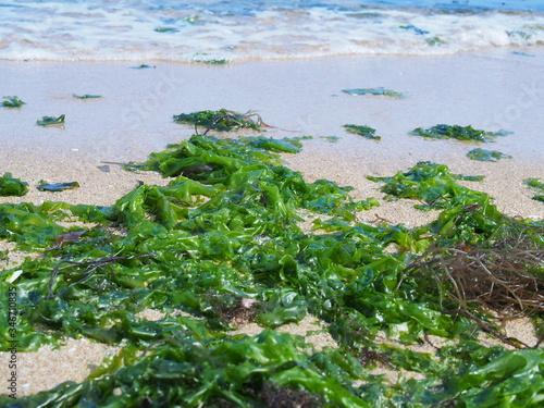 Photo Algae Washed Ashore On Beach