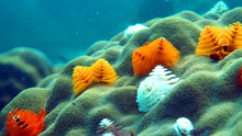Diving, Coral Reef, Christmas ...