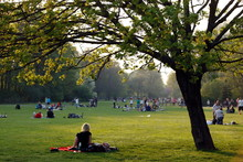 People Sitting On Grassy Field At Park