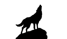 Silhouette Of Wolf On White Ba...
