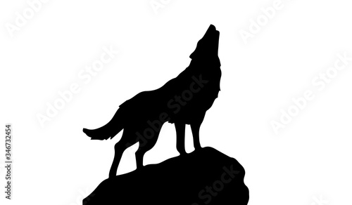 Photo Silhouette of wolf on white background