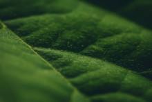 Close Up Macro Photo Of A Gree...