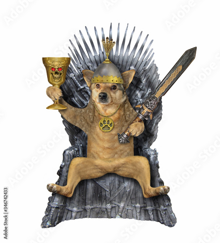 Fotografie, Obraz The beige dog king in a helmet with an inlaid sword and a gold cup is sitting on an iron throne