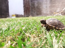Close-up Of Turtle On Grass
