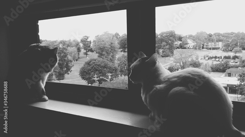 Photo Cats Sitting On Window Sill