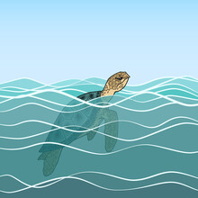 Adult Sea Turtle Emerged From The Water, Sea, Ocean. The Head Of The Turtle Is Above The Surface Of The Water, The Shell, The Fins Are Under Water. Image Of A Turtle Among The Waves. Clear Water.