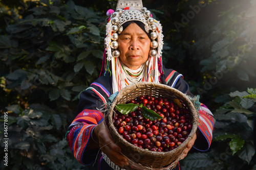 Photo woman unidentified coffee farmer is harvesting coffee berries in the coffee farm