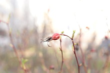 The Beginning Of Spring, Buds ...