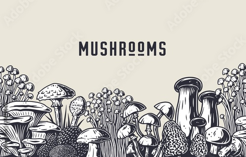Fotografija Autumn forest mushroom picking, vegan menu pattern
