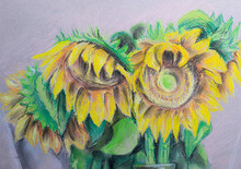 Drawing Sunflower With Pastel ...