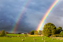 Beautiful Double Rainbow In Sky Over Field Of Sheep With Dramatic Clouds