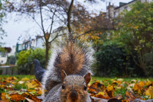 Close-up Of Squirrel In Park