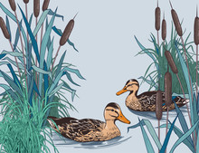 .Wild Ducks In The Thickets Of...