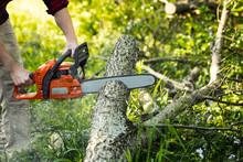 Arborist Cutting Fallen Tree