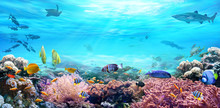 Animals Of The Underwater Sea World. Life In A Coral Reef. Colorful Tropical Fish. Hunting Shark. Ecosystem.