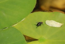 Close-up Of House Fly On Leaf