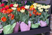 Beautiful Flowers In Pots (mul...