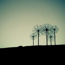 Pinwheels On Silhouette Field ...