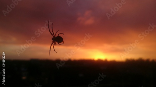 Fototapeta Low Angle View Of Silhouette Spider Against Cloudy Sky During Sunset obraz na płótnie