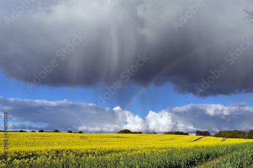 chmura deszczowa i tęcza nad polem rzepaku