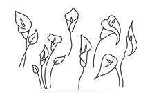 Doodle Calla Lilies Icon Isolated On White. Sketch Flower. Coloring Page Book. Hand Drawing Line Art. Outline Vector Stock Illustration