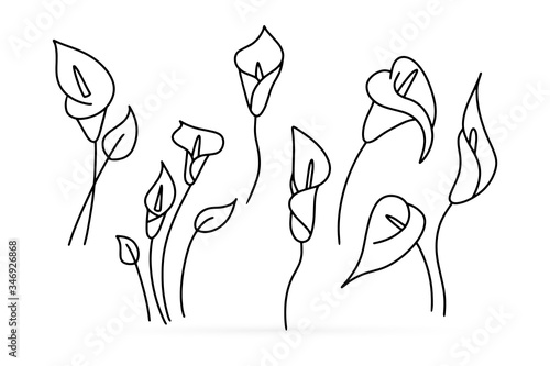 Canvas Print Doodle calla lilies icon isolated on white