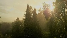 Idyllic Shot Of Rain With Sunlight In Forest