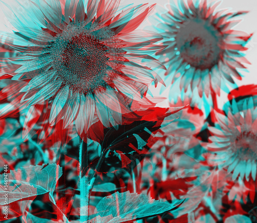 Photo Anaglyph effect of sunflowers.