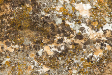 Lichens And Moss On Stone