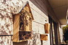 Insect Hotel Being Visited By Bees