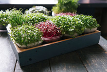 Box With Microgreens On Wooden...
