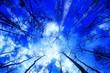 Leinwanddruck Bild - Directly Below Shot Of Bare Trees Against Blue Sky