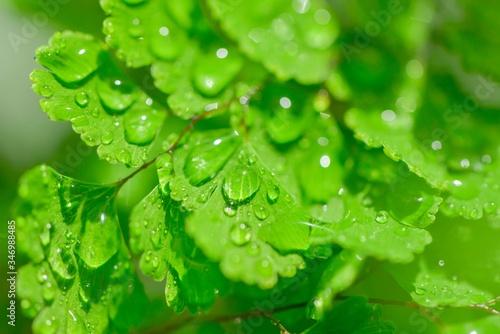 爽やかな植物の新芽と水滴と水玉 Canvas Print