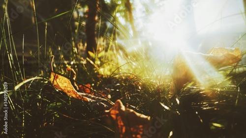 Fotografía Sunlight Falling On Leaves And Grass On Field