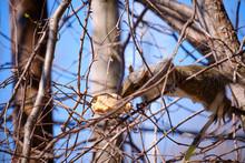 An Eastern Grey Squirrel In  T...