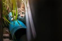 Black And White Stray Kitten