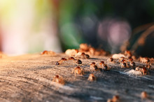 Colony Of Termite, Termites Ea...