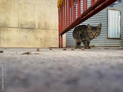 Fotografiet Portrait Of Cat On Street