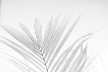 Abstract Gray Shadow Backgroun...