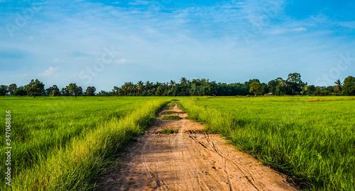 Fotografiet Dirt Road By Grassy Field