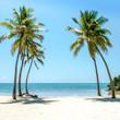 Palm Trees On Beach