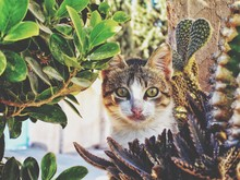 Portrait Of Cat Sitting By Plants Outdoors