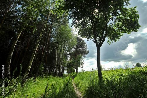 Obraz Skraj lasu na Roztoczu - okolice miejscowości Samsonówka - fototapety do salonu