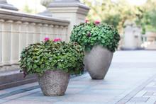 Blooming Flowers In Stone Flowerpots On The Terrace